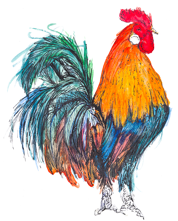 567x704 Drawing Of The Week Rooster Ella's Place