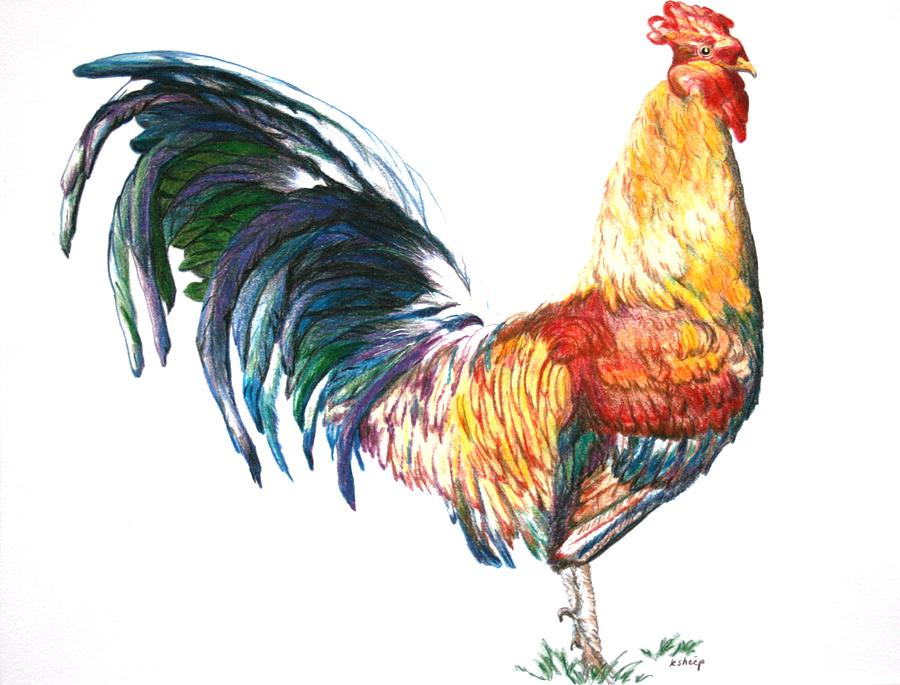 900x685 Rooster Drawing By Kathy Roberts