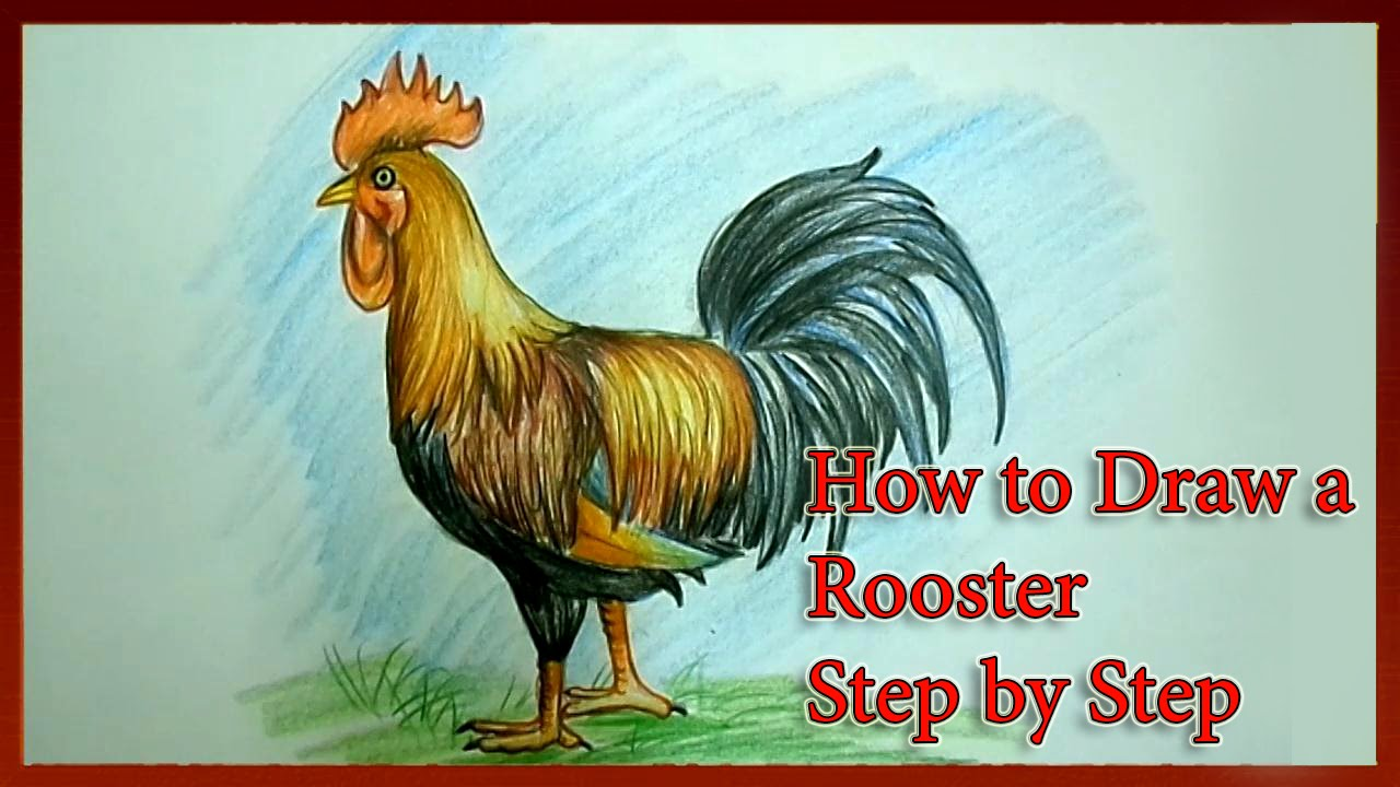 1280x720 How To Draw A Rooster Step By Step