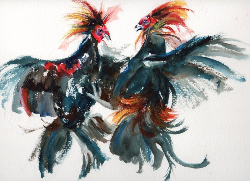 800x580 Artbycrain Hostile Takeover ~ Fighting Roosters