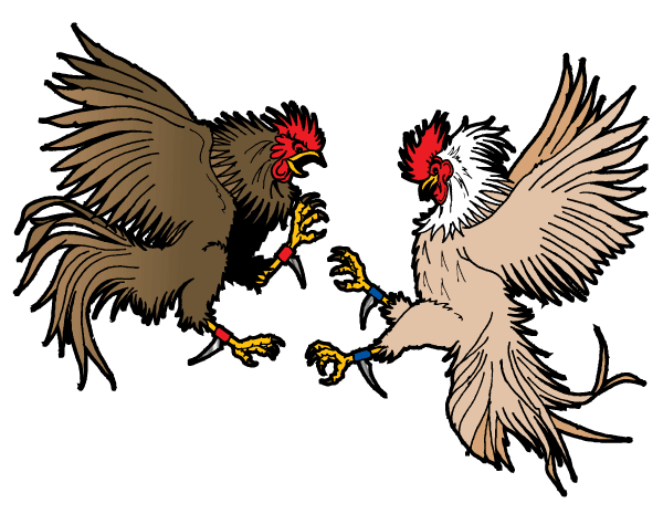 600x465 Fighting Rooster Drawing
