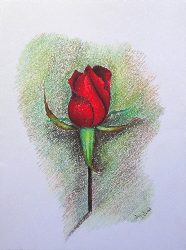 600x803 13 Unique Rose Drawing