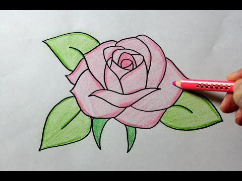 480x360 Drawing A Rose
