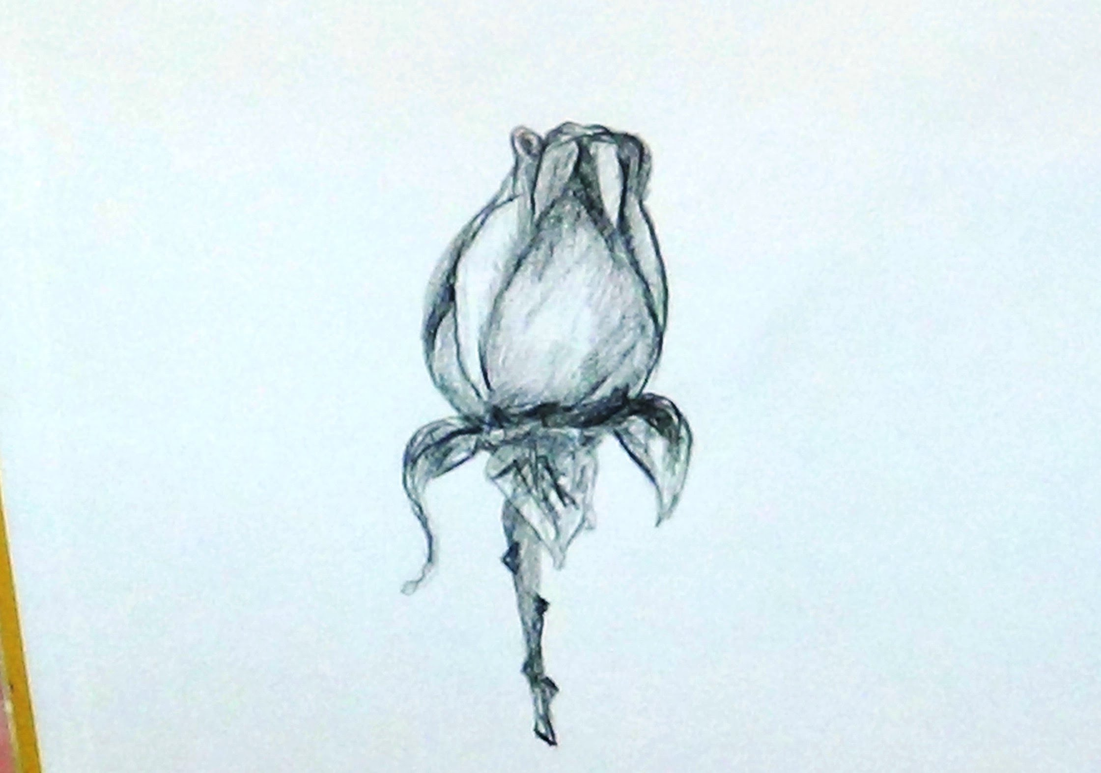 2241x1574 How To Draw A Rose Bud With Stem For Beginners