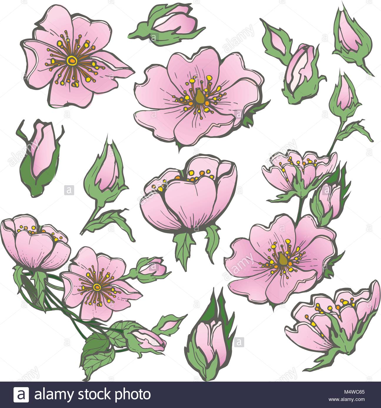1295x1390 Red Rose Buds Stock Vector Images
