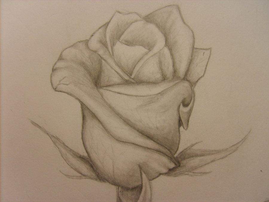 900x675 Rose Bud Tattoo Cool Ink Rose Bud Tattoo, Rose