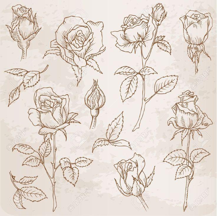736x734 Rose And Buttercup Tattoo Random Rose Bud Tattoo