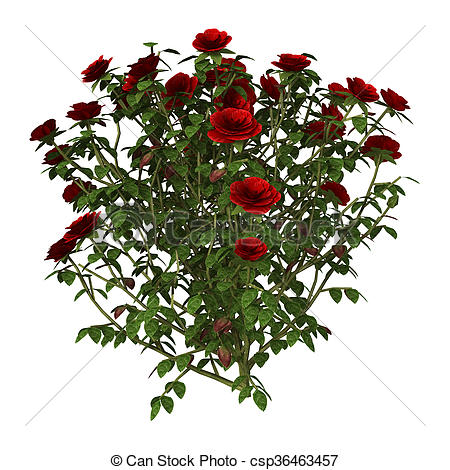 450x470 3d Illustration Red Rose Bush On White. 3d Illustration