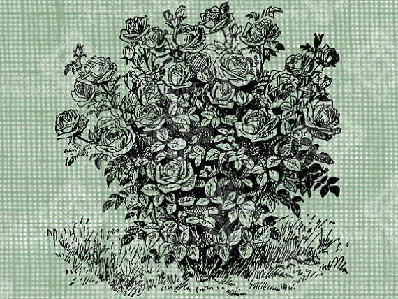 570x428 Digital Download Rose Bush Digi Stamp By Britishislesartworks