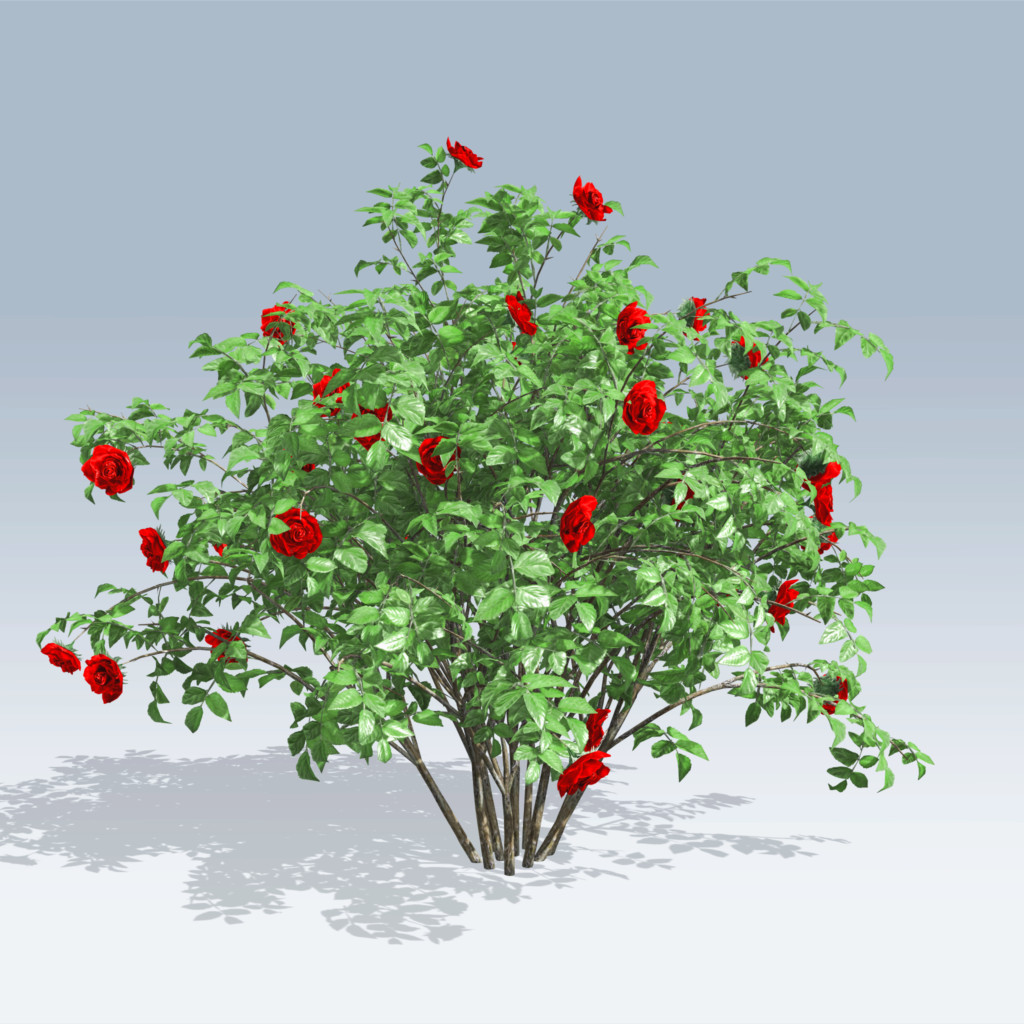1024x1024 Gallery Rose Bush,