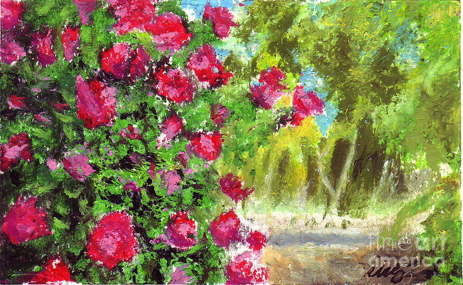 900x554 Rose Bush Drawings Fine Art America
