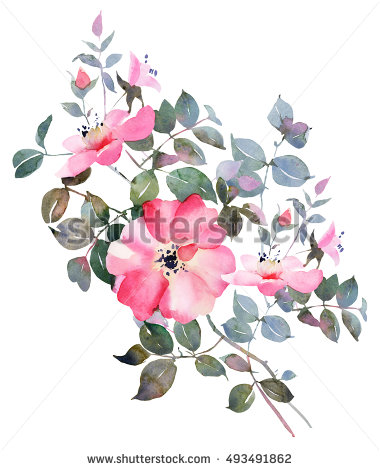 380x470 Rose Watercolor Flower Illustration,bohemian Rose Bush Drawing