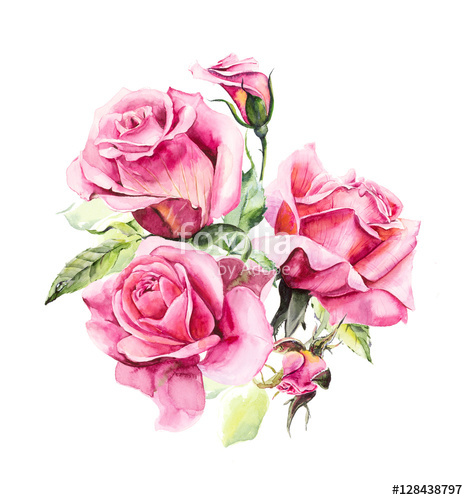 468x500 Rosebush. Pattern From Pink Rose. Wedding Drawings. Watercolor