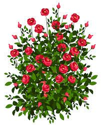 202x249 Rose Bush Clip Art