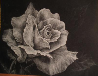 400x309 How To Draw Roses Using Charcoal Rose In White Charcoal Roses