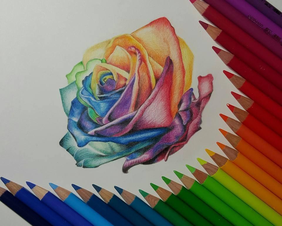 Rose Color Pencil Drawing at GetDrawings | Free download