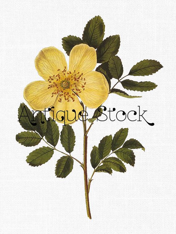 570x760 Flower Clipart