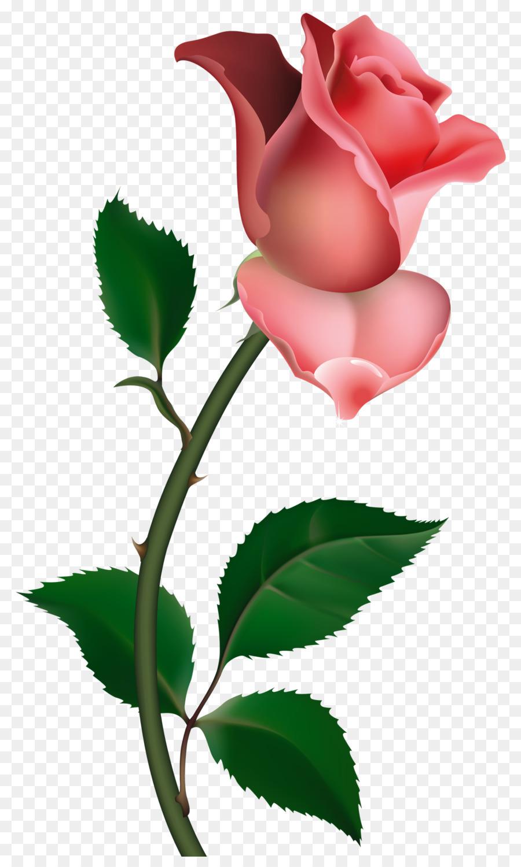 900x1500 Rose Drawing Bud Clip Art