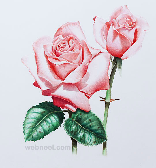 541x584 40 Beautiful Flower Drawings And Realistic Color Pencil
