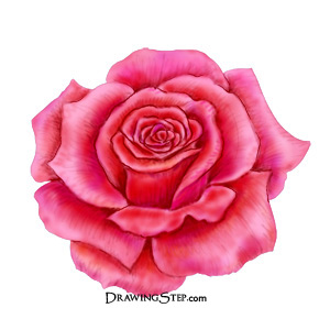 300x300 How To Draw A Rose Step By