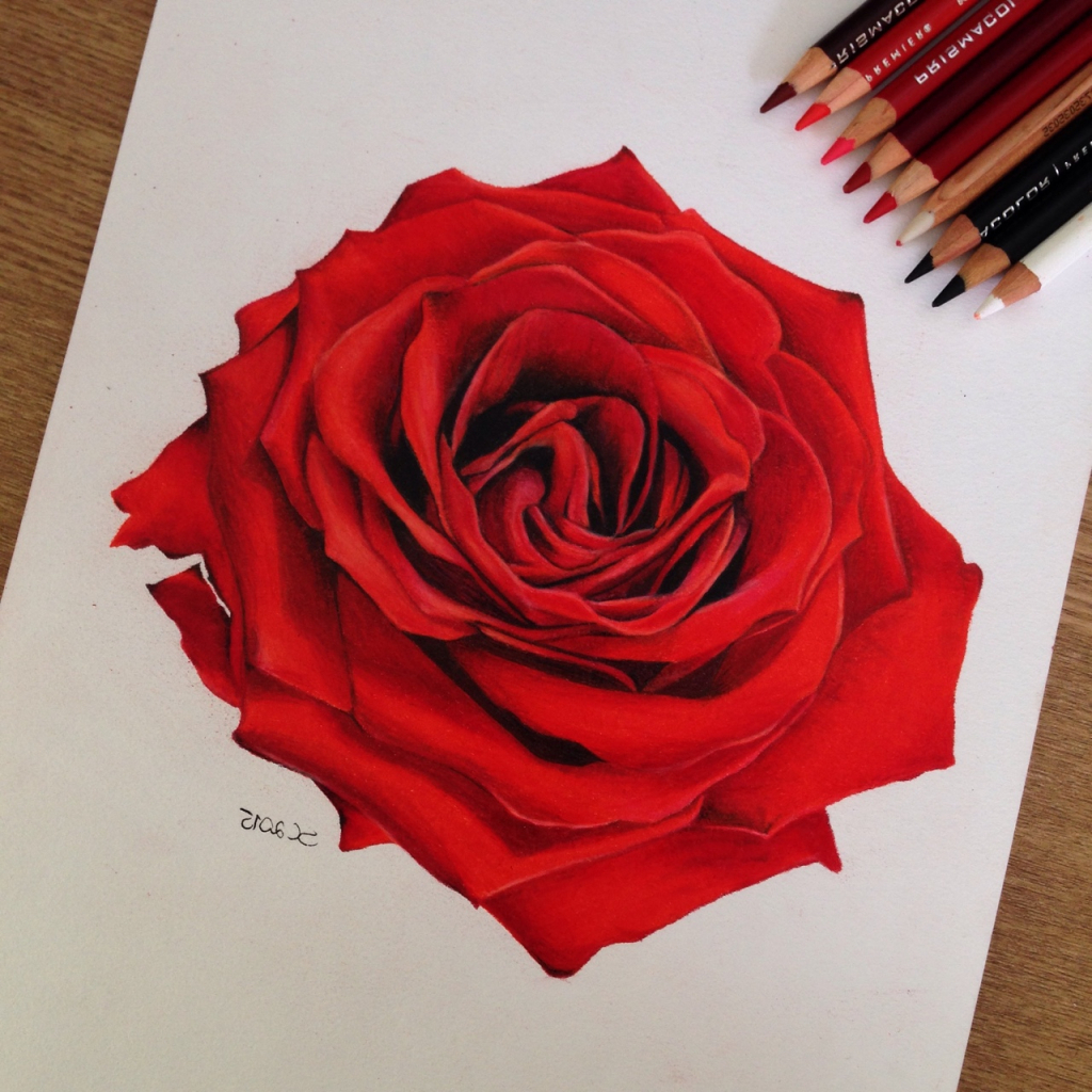1024x1024 Colorful Rose Drawings Pinterest Red Roses 1000 Images