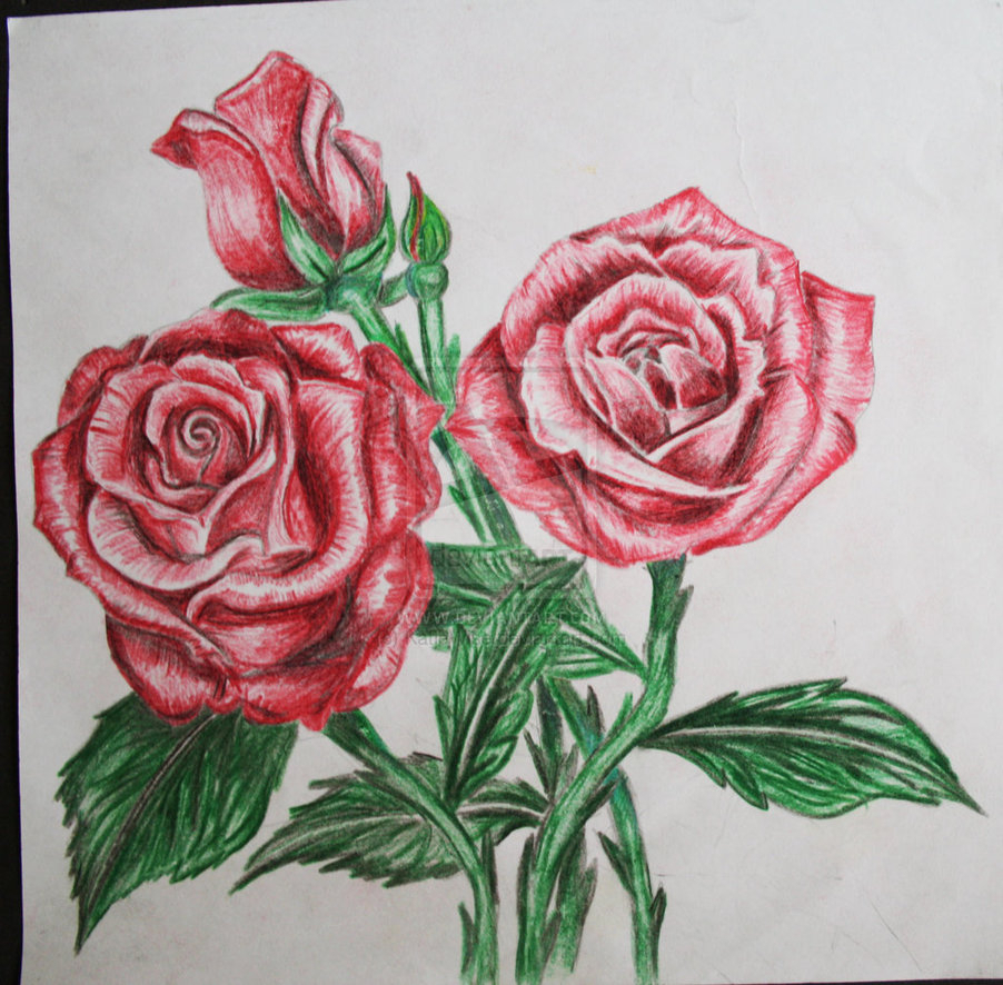 Rose Drawing In Color at GetDrawings.com | Free for personal use ...