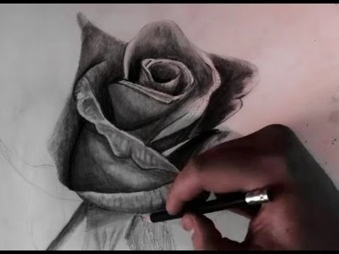 480x360 Drawing A Rose With Pencil Realistic