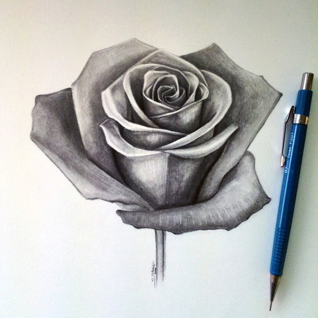 1024x1024 Realistic Rose Pencil Sketches Drawing A