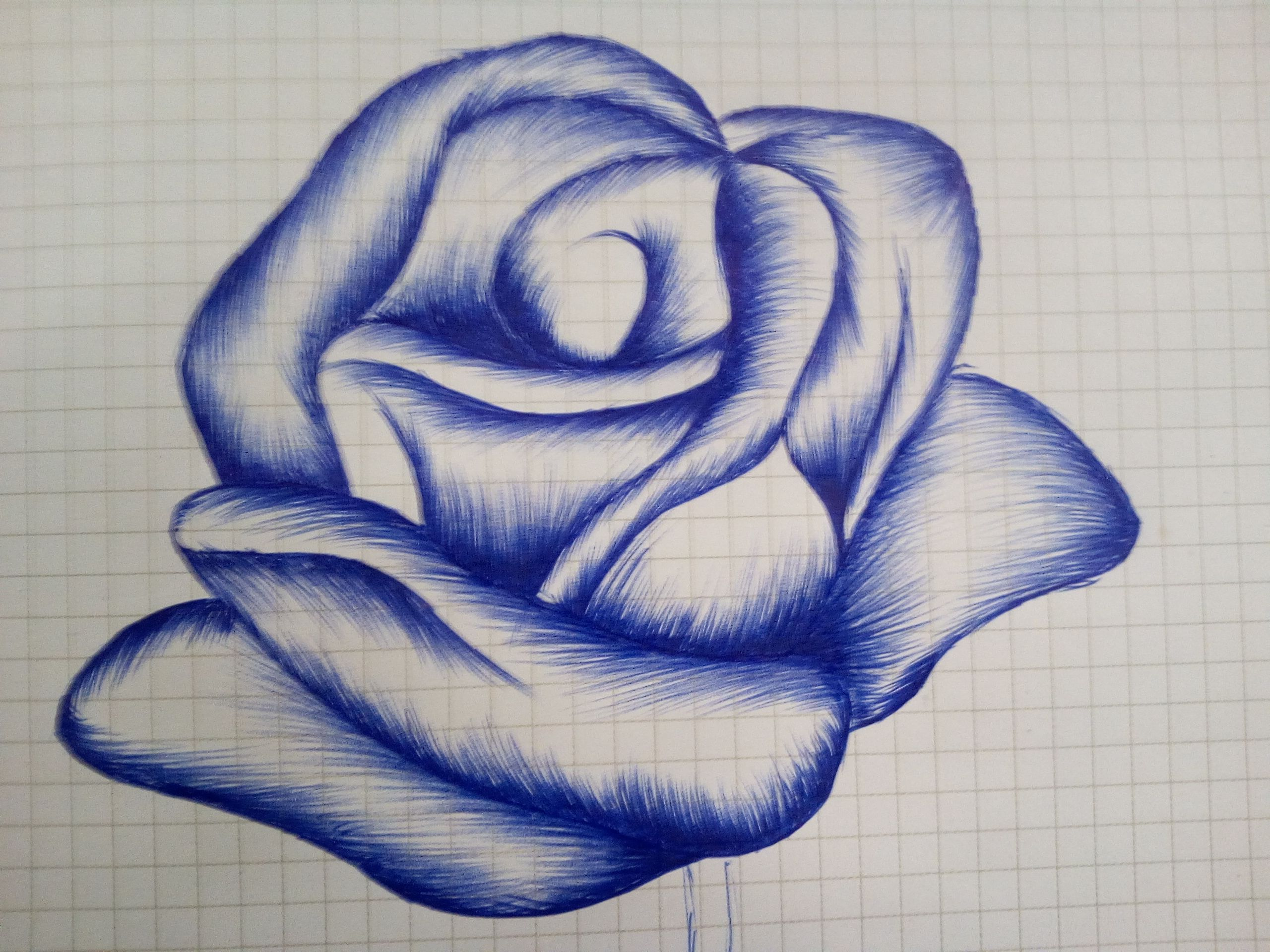 rose drawing pen at getdrawings com free for personal use rose