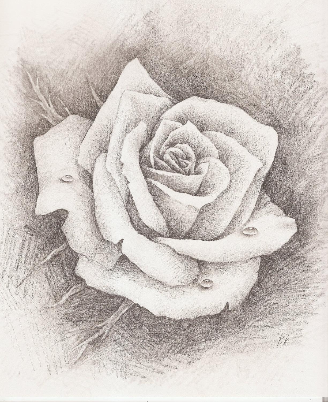 rose drawing pencil at getdrawings free download