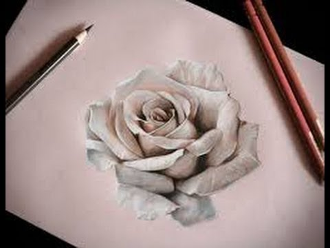 480x360 how to draw realistic rose