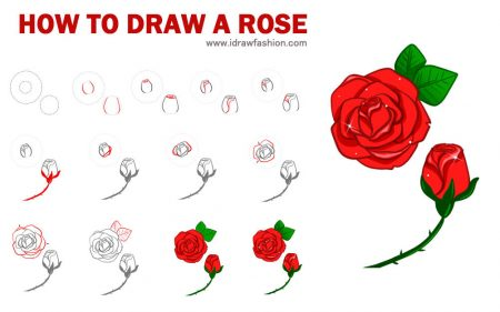 rose drawing steps at getdrawings com free for personal use rose
