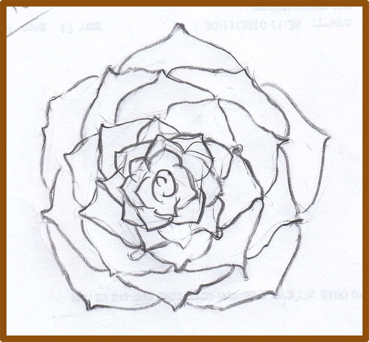 Rose drawing steps beginners at getdrawings free for personal 736x681 19 best step by step drawing images on pinterest drawing classes mightylinksfo