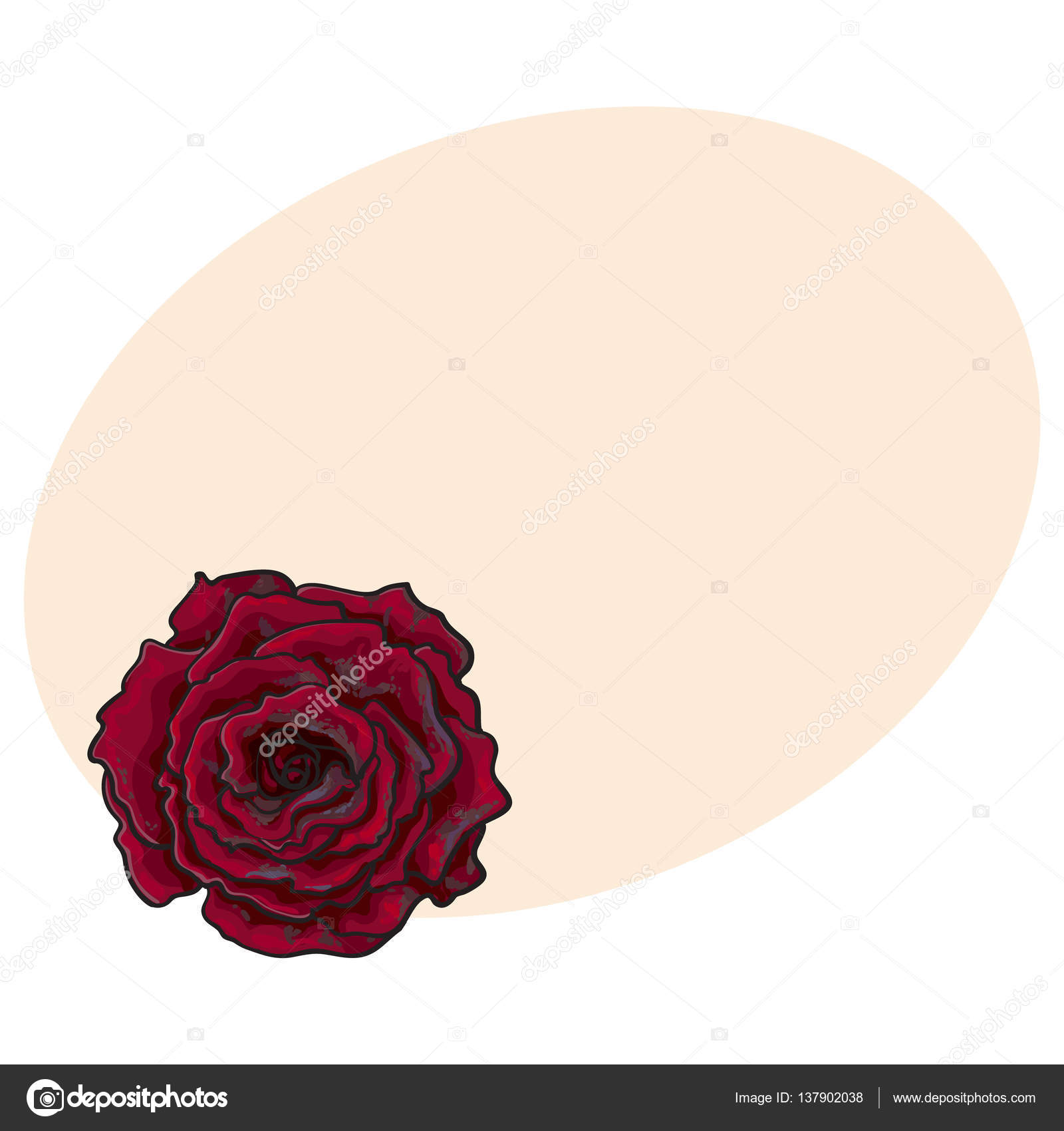 1600x1700 Deep Red, Ruby Rose, Top View Isolated Sketch Vector Illustration