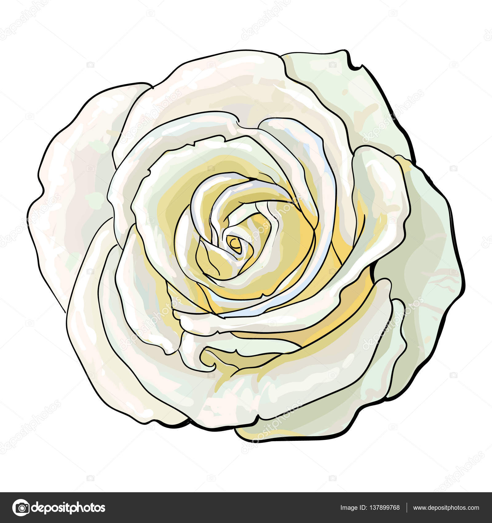 1600x1700 Deep White Rose, Top View Isolated Sketch Vector Illustration
