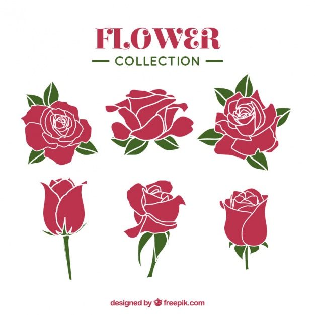 626x626 Roses Vectors, Photos And Psd Files Free Download