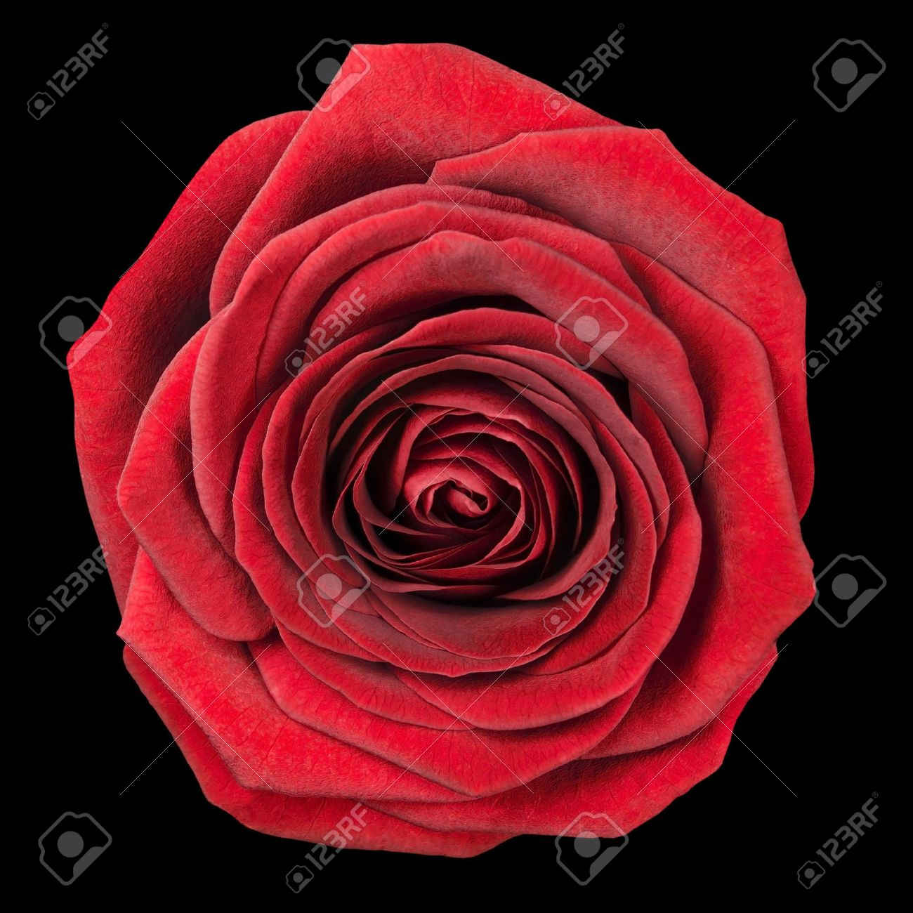 1300x1300 Cliserpudo Black And Red Rose Drawing Images