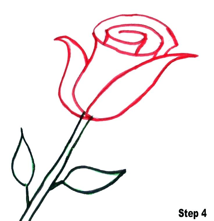 736x761 Easy To Draw Roses