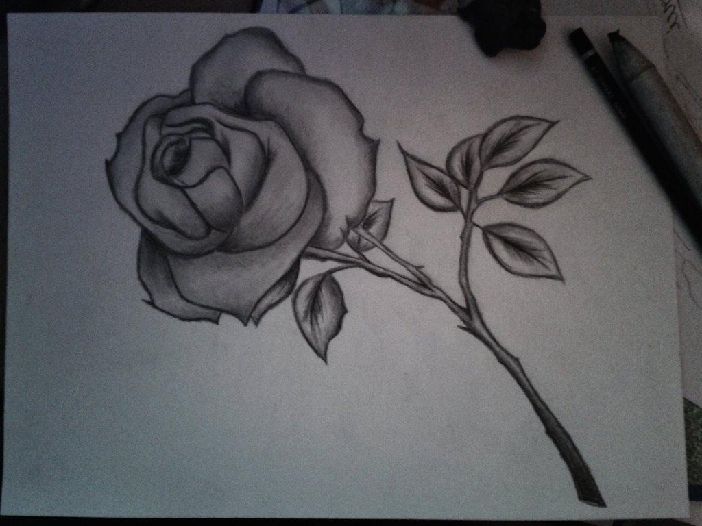 1024x768 Flowers Pencil Sketch Art Pencil Art Flowers Flower Pencil