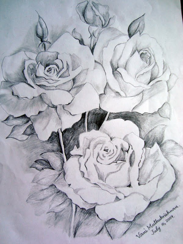 600x800 graphite roses mypencilwork