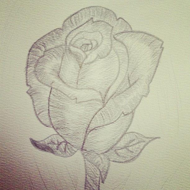 612x612 My Rose