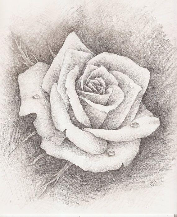 570x698 Original Pencil Drawing Rose Water Drop Fine By Paulasgalleria