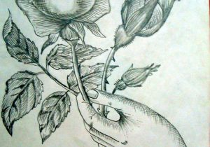 300x210 Pencil Sketch Rose Flowers