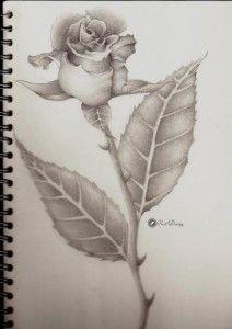 212x300 Rose Pencil Drawing Roses