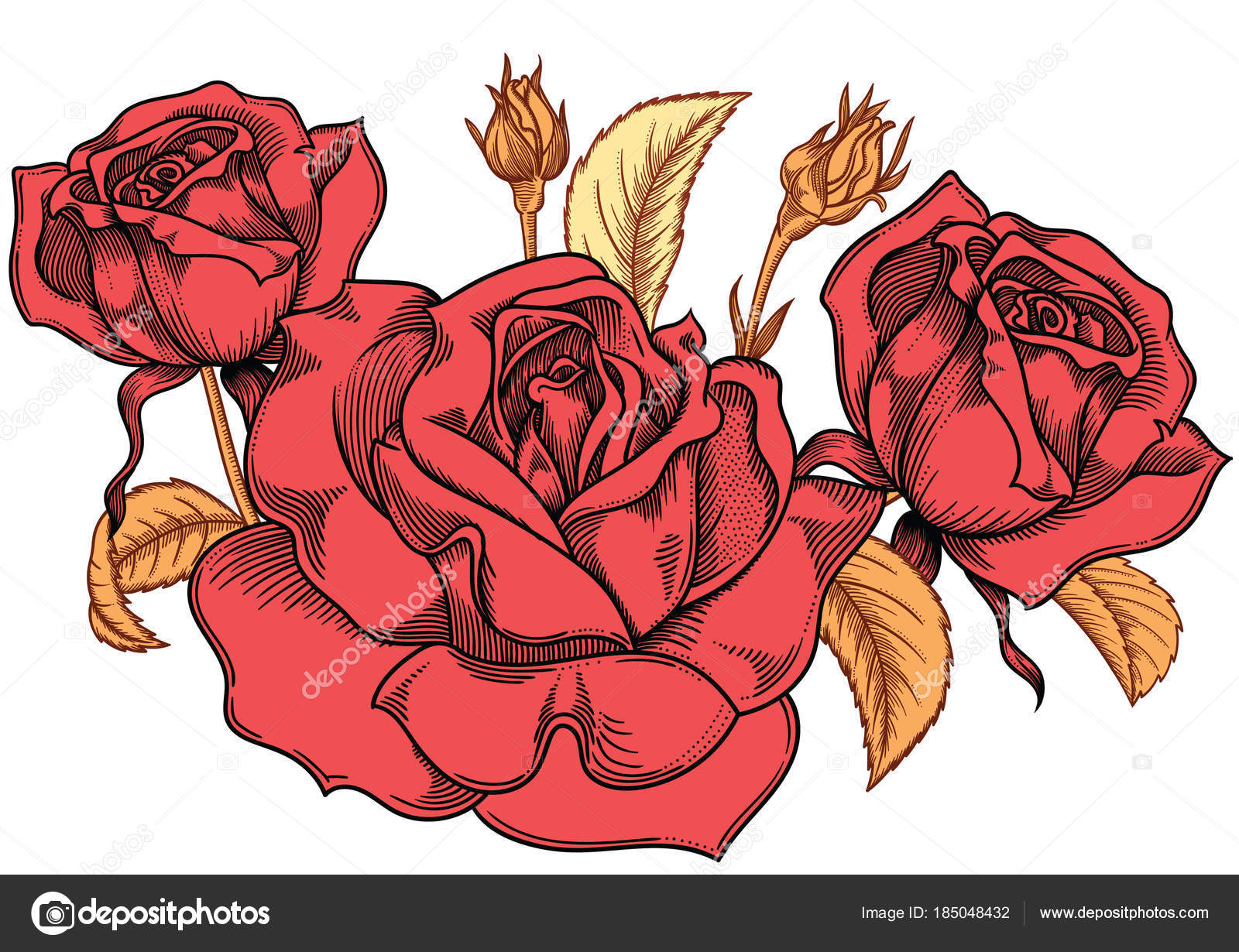 1600x1230 Blooming Red Roses Flowers , Detailed Hand Drawn Vector