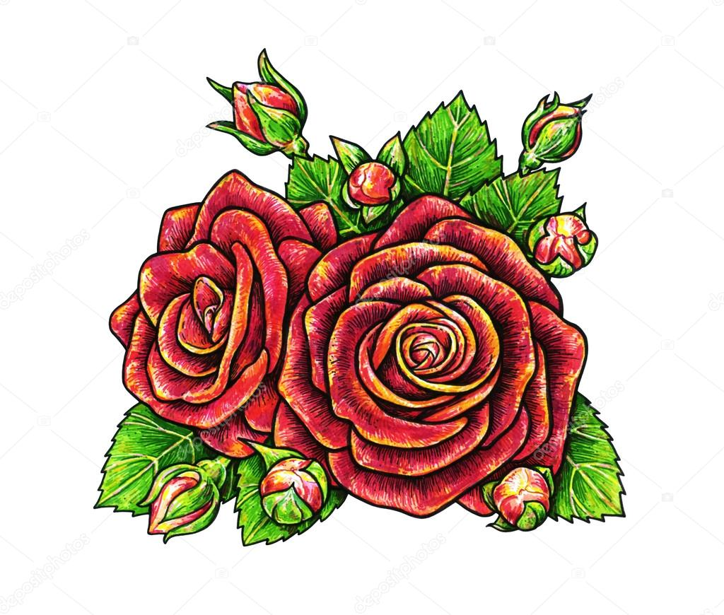 1024x870 Red Roses Flowers Is Isolated On A White Background. Rose Drawing