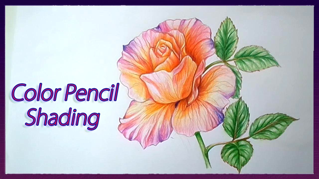1280x720 Rose Flower Colour Pencil Drawings Realistic Color Pencil Shading