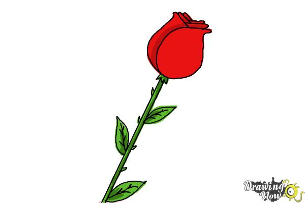Rose For Beginners Drawing At Getdrawings Com Free For Personal