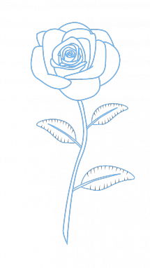 215x382 How To Draw Red Rose, Flowers, Plants, Easy Step By Step Drawing