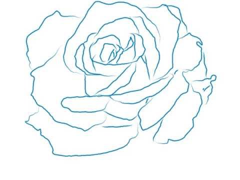 480x360 How To Draw A Beautiful Rose Line Drawing